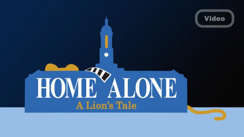 Home Alone - A Lion's Tale